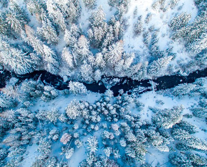 Bend Oregon Winter Trees
