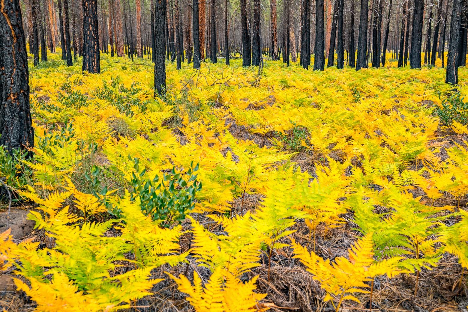 Autumn Color Central Oregon