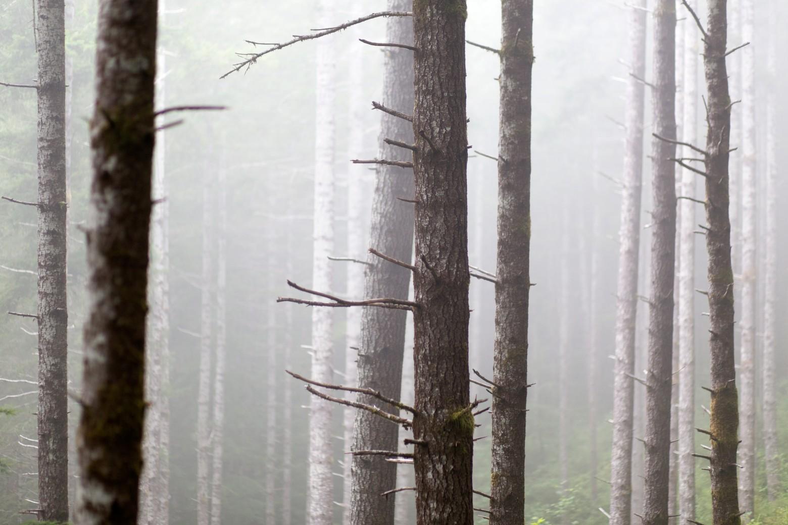 Oregon Coast Trees