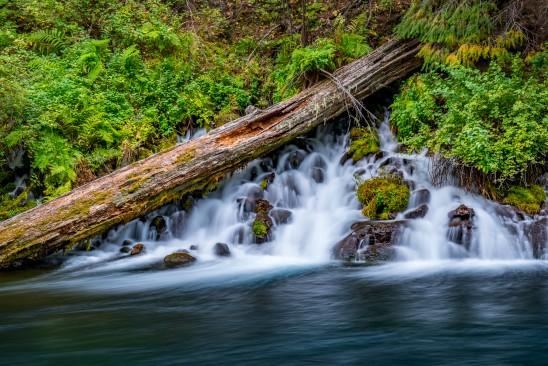 Metolius River Log