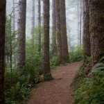 Oregon Coast Hiking Trail