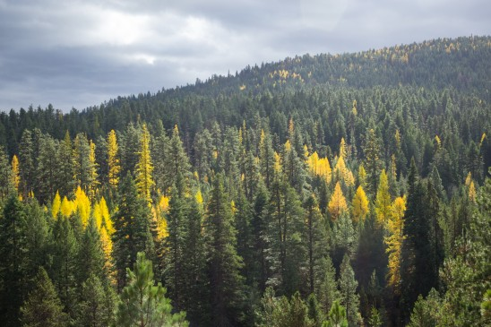 Autumn Tree Line Ochoco Forest
