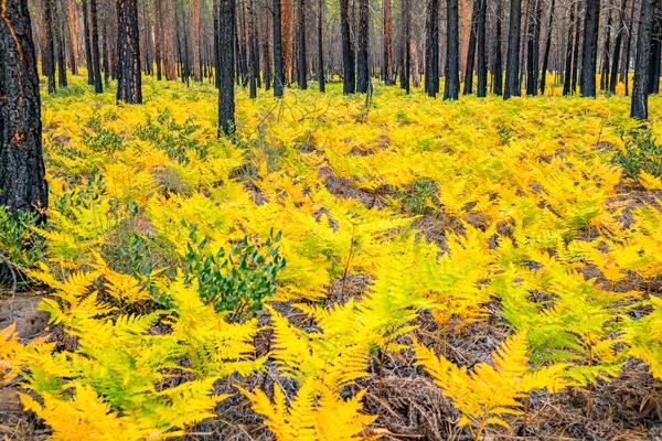 metolius Fall Colors Leafs