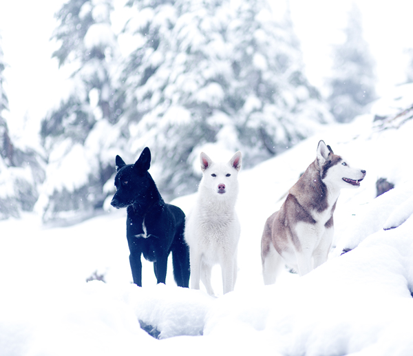 Dogs on First Snowfalls In Bend Oregon