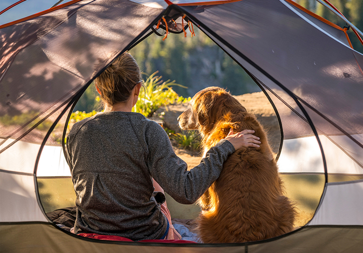 Dog & Human Camping In Tent