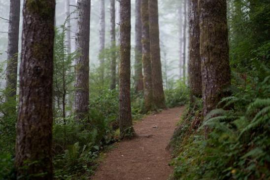 Oregon Coast Hiking Trail