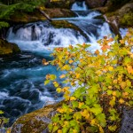 Mckenzie River Autumn