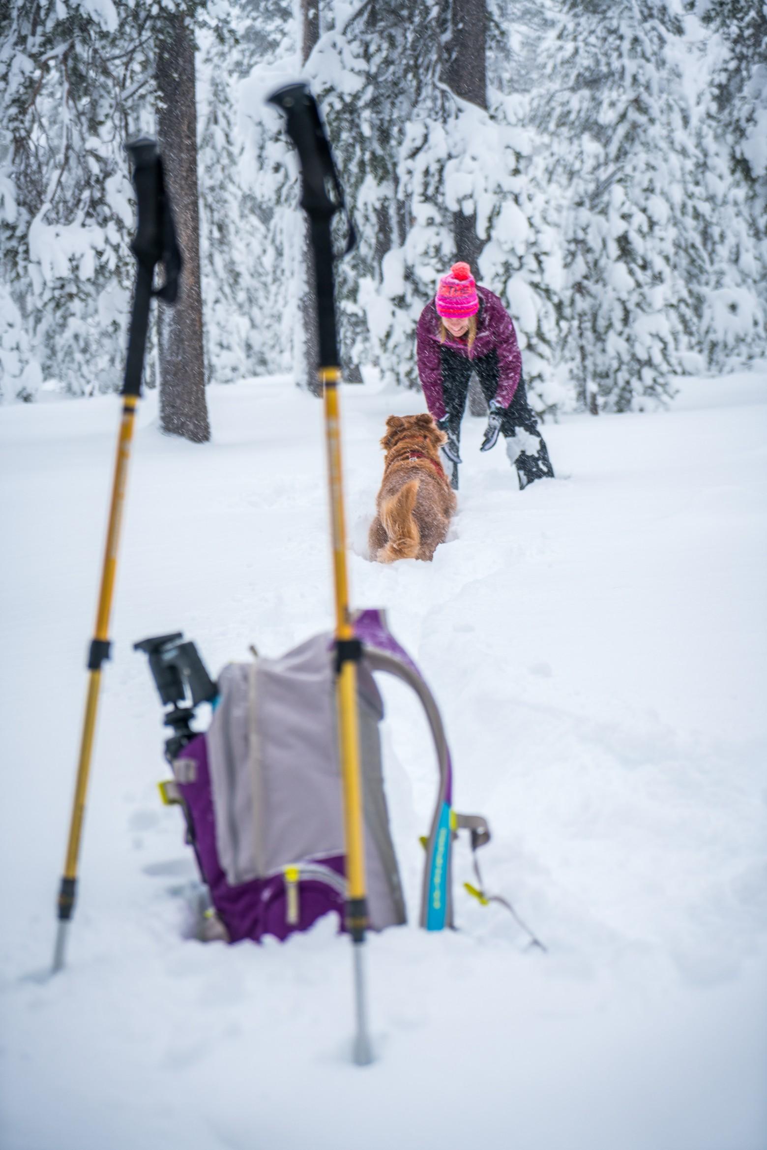 Winter Hiker & Golden Retriever
