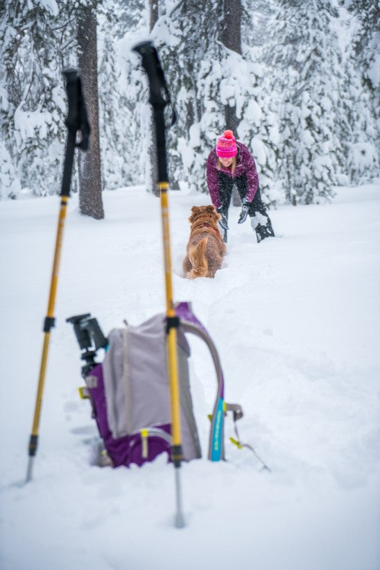 Winter Hiker & Golden Retriever